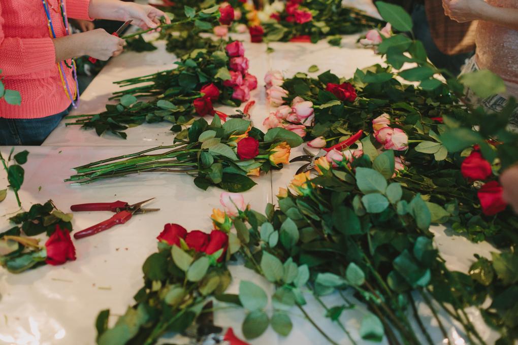 Des roses à perte de vue !