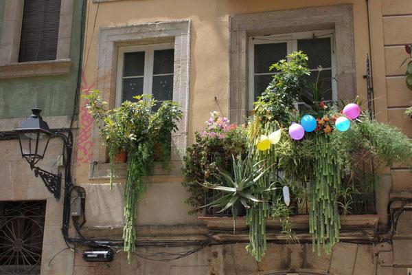 Fleurs et cactus au balcon