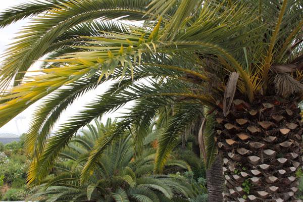 Jardin Botanique, Barcelona