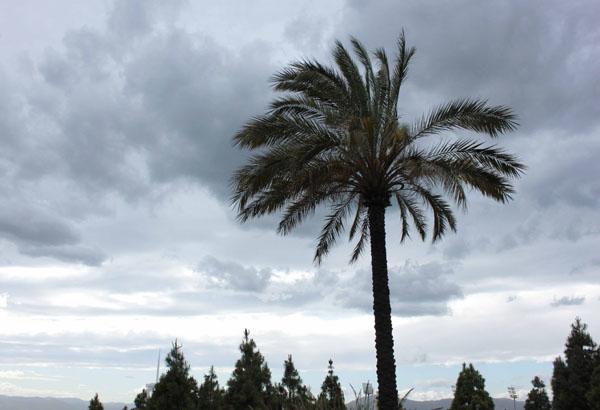 Barcelone, je m'invite chez Joan Miró et Mies Van der Rohe #4