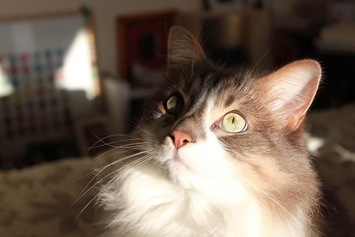 Khadgar, le chat de la maison