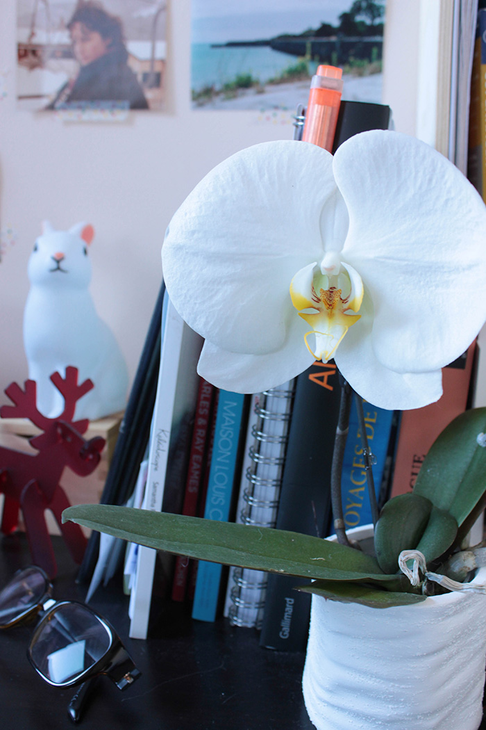Mini orchidée blanche