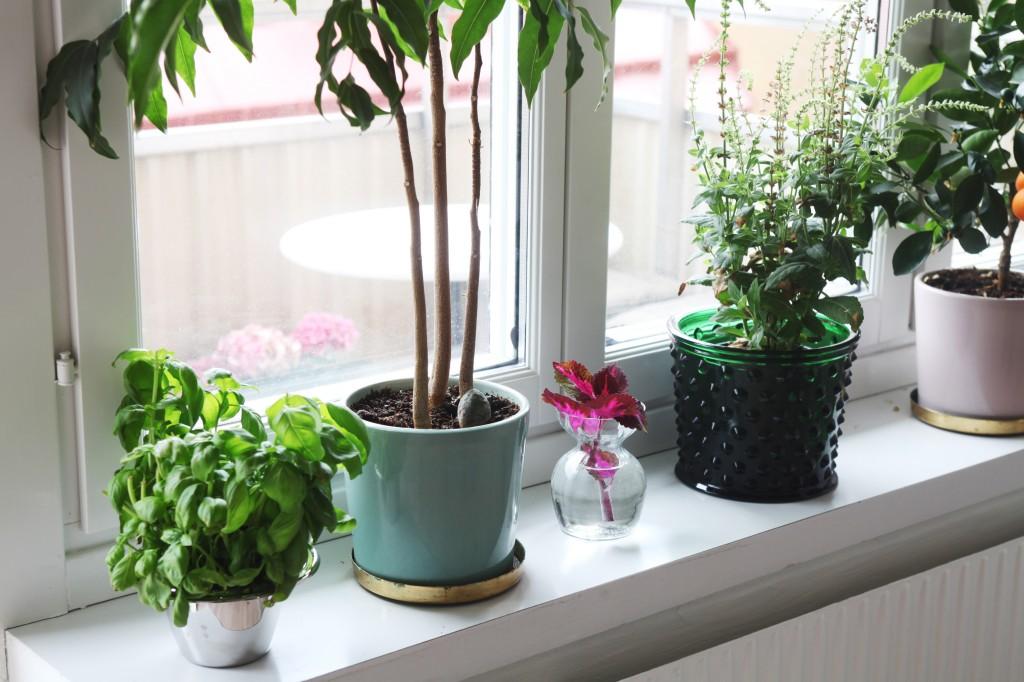 Décoration avec accumulation de plantes vertes