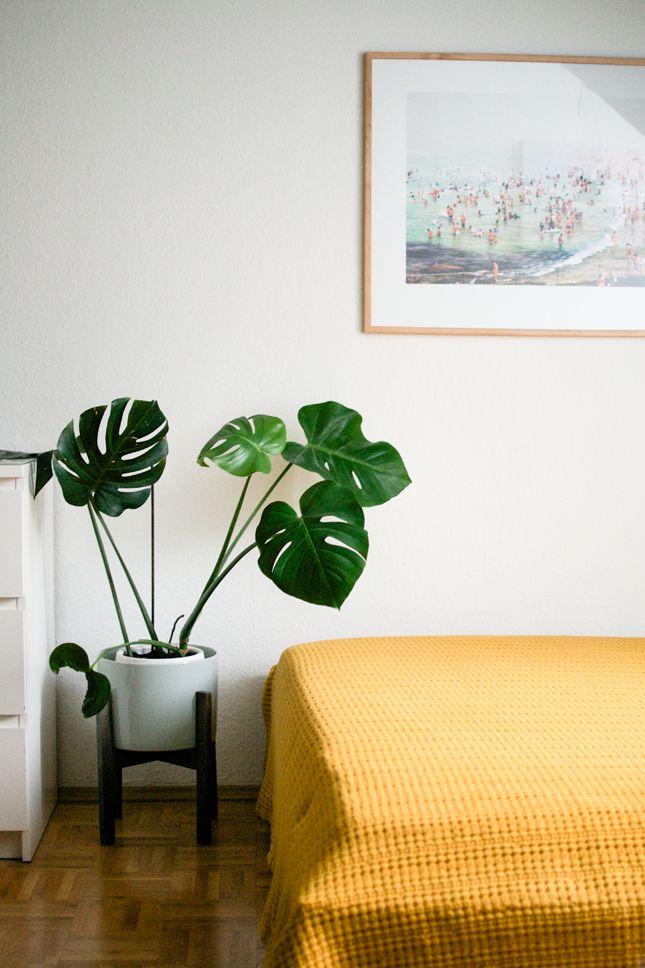 Avoir une plante verte dans une chambre à coucher
