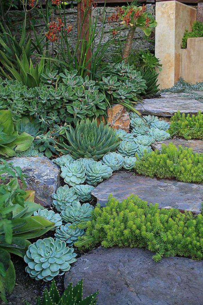 Planter des succulentes dans son jardin