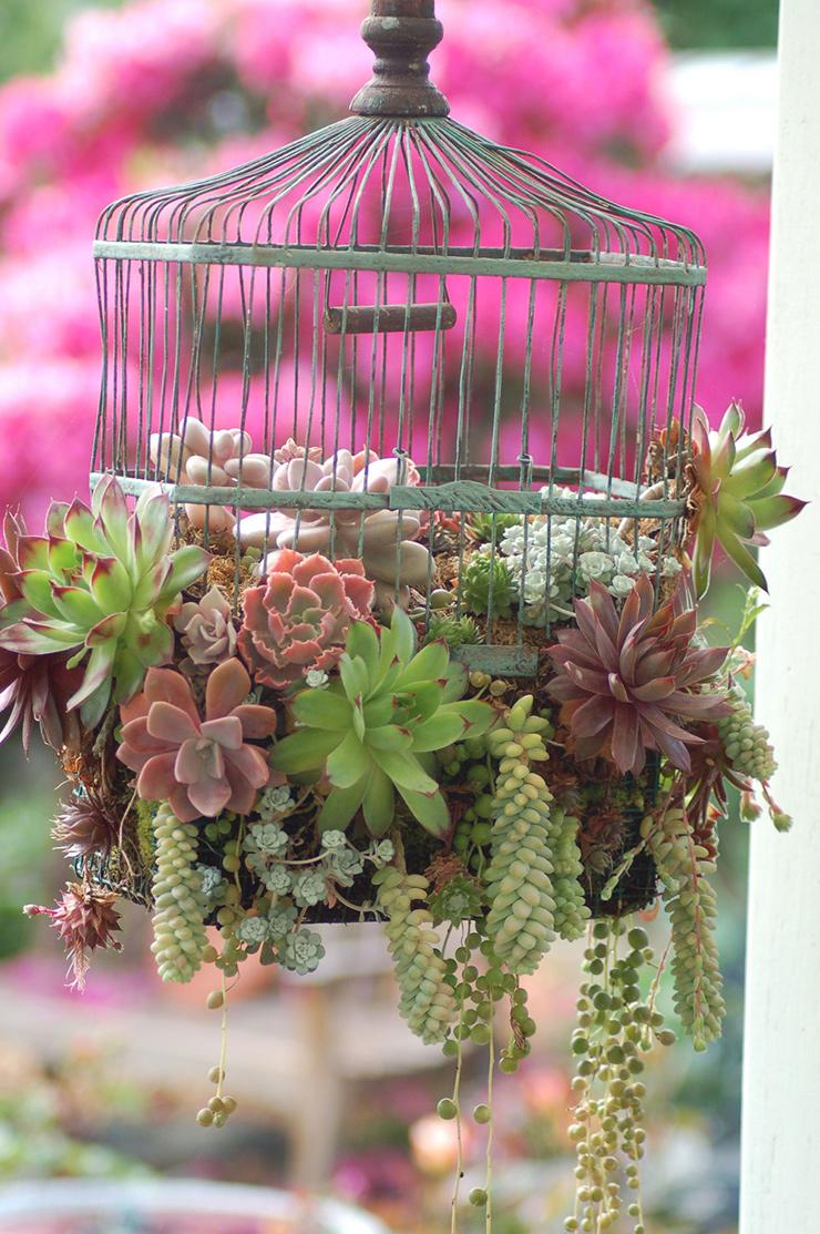 Que faire avec une ancienne cage à oiseaux idée DIY