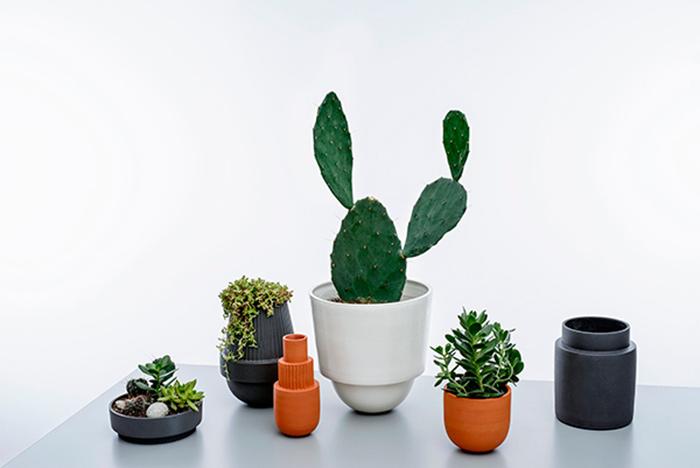 Accumulation de plantes vertes