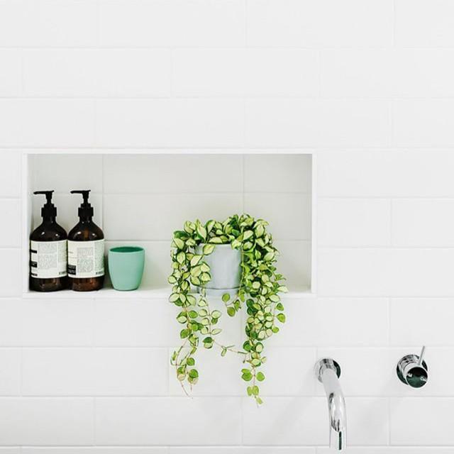 Des plantes vertes dans la salle de bain - Frenchy Fancy