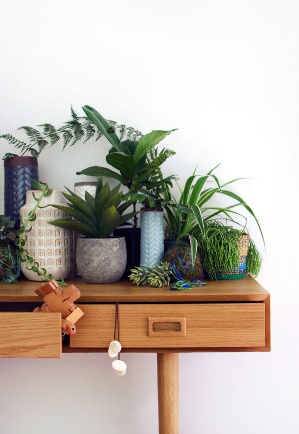 Stylisme avec des plantes vertes