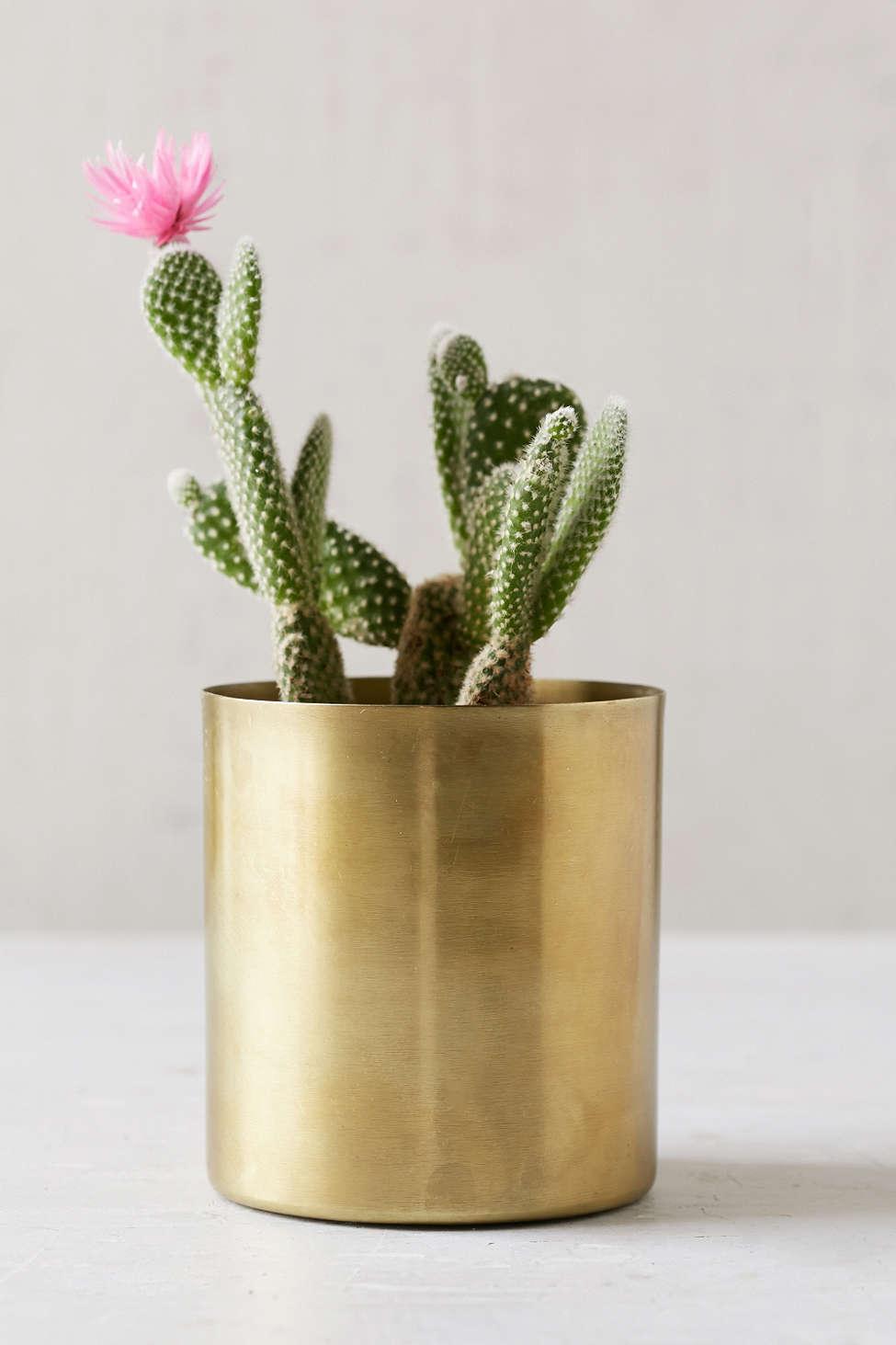 Pot de fleur en laiton doré