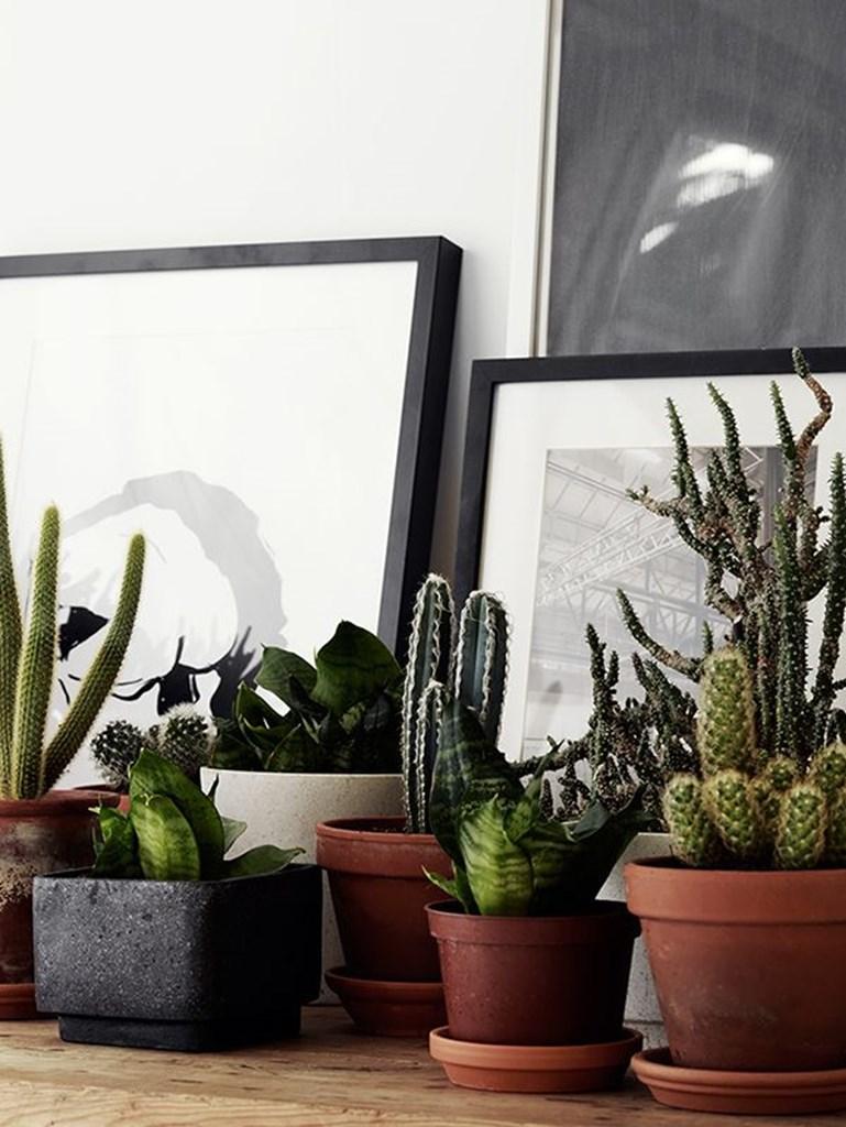 Accumuler des plantes vertes en décoration