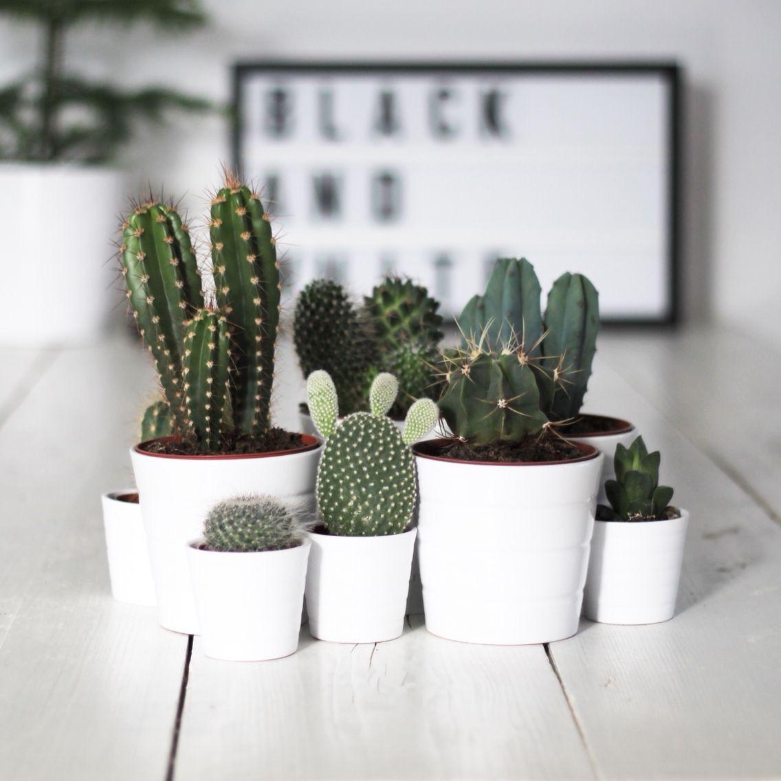 S'entourer de belles plantes : les cactus - FrenchyFancy