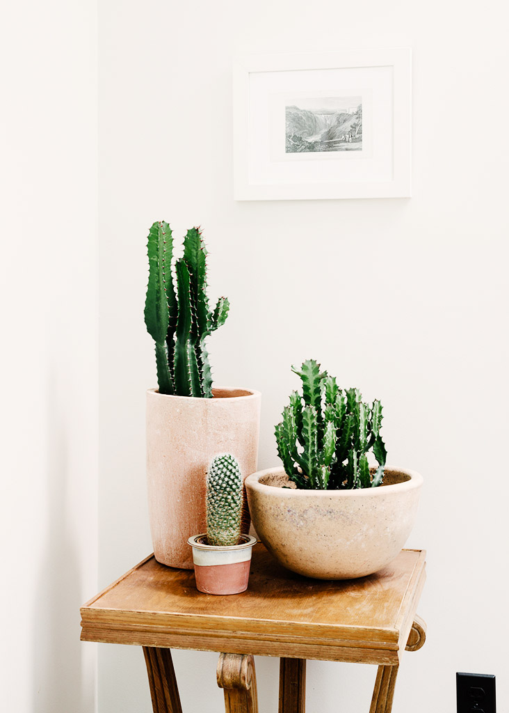 Accumulation de cactus