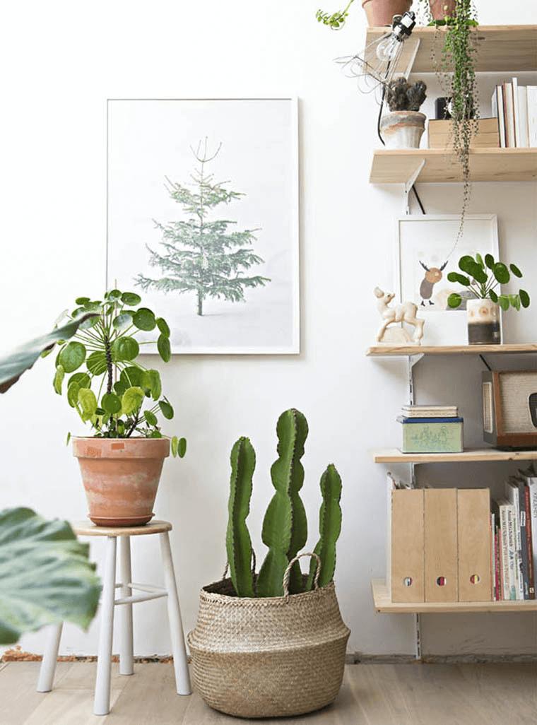Cactus dans un panier boule