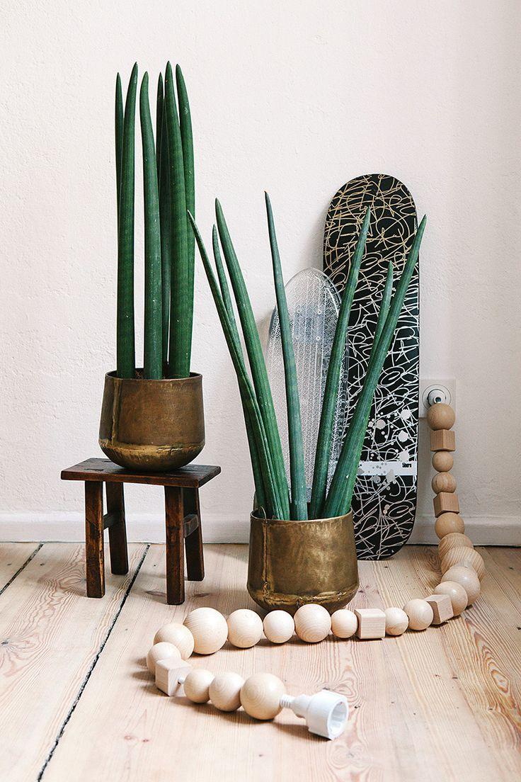 Tendance : les cactus et les plantes grasses en décoration