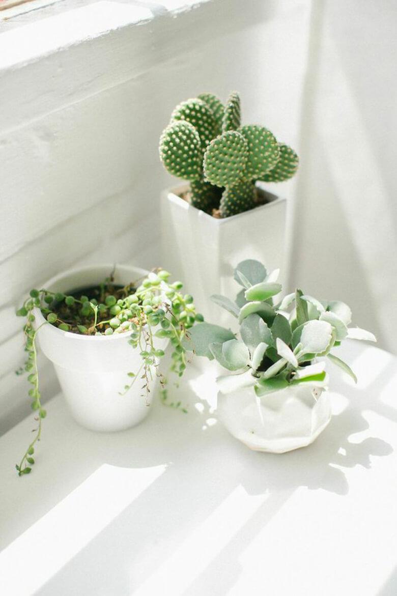 Tendance : les cactus et les plantes grasses
