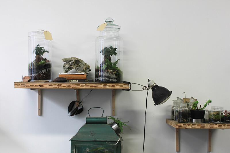 Terrarium avec des bonbonnes en verre vintage