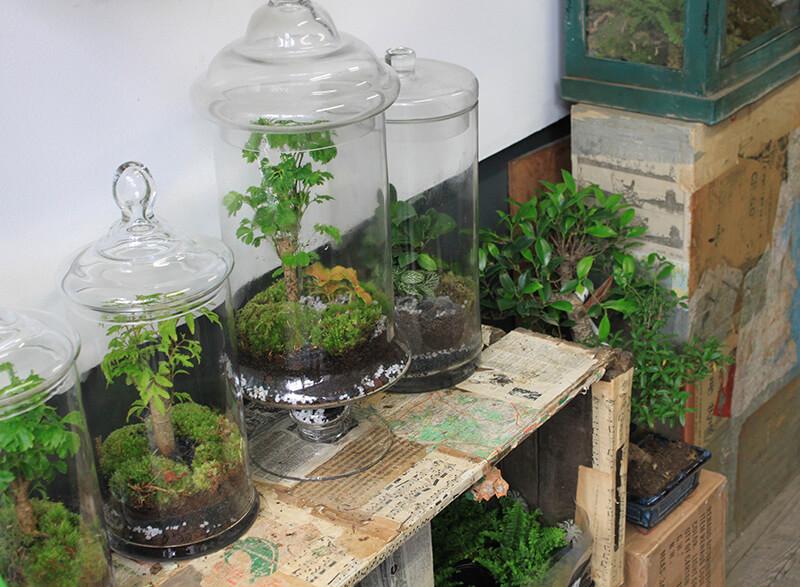 Réaliser un terrarium