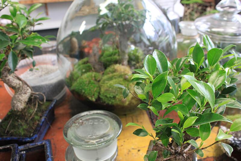 Atelier réalisation terrarium