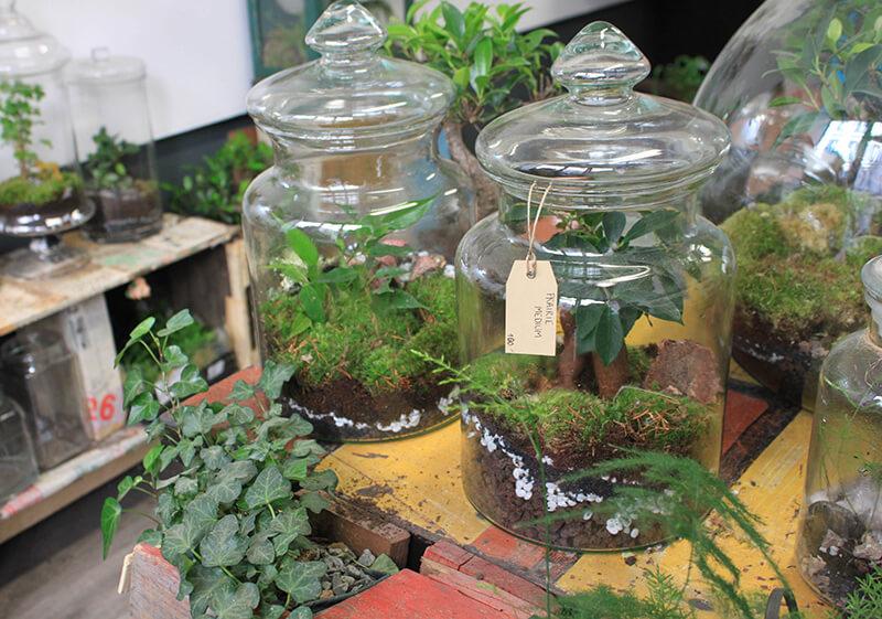 Tendance : les terrariums dans la déco