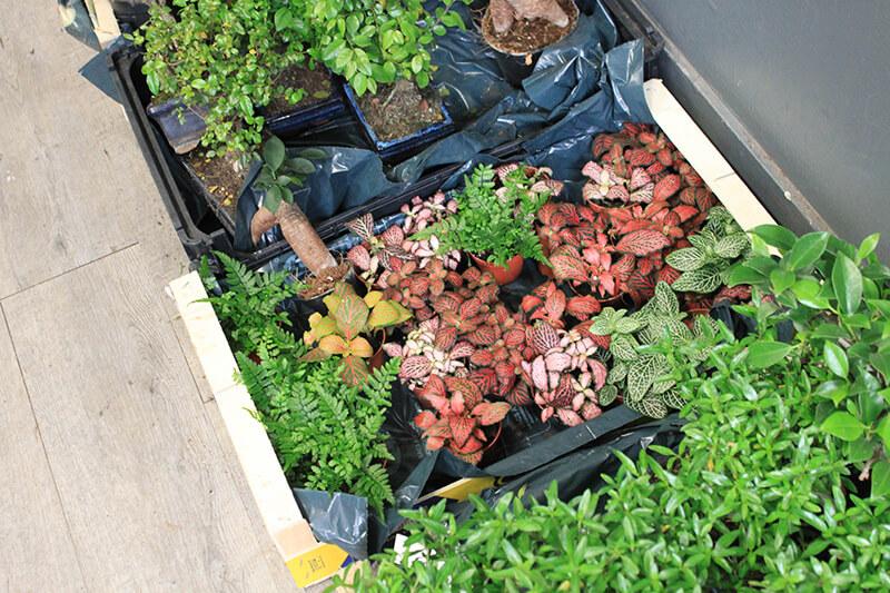 Variétés de plantes vertes pour l'intérieur