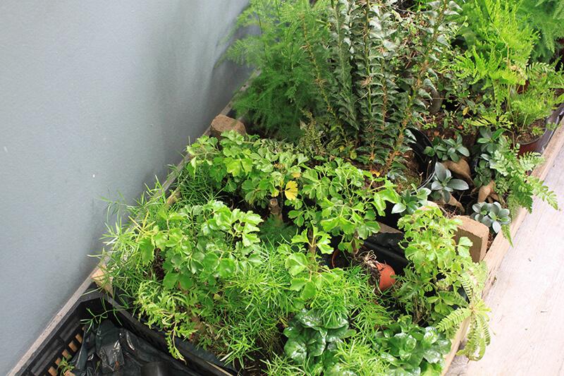 Plantes vertes pour décorer son intérieur