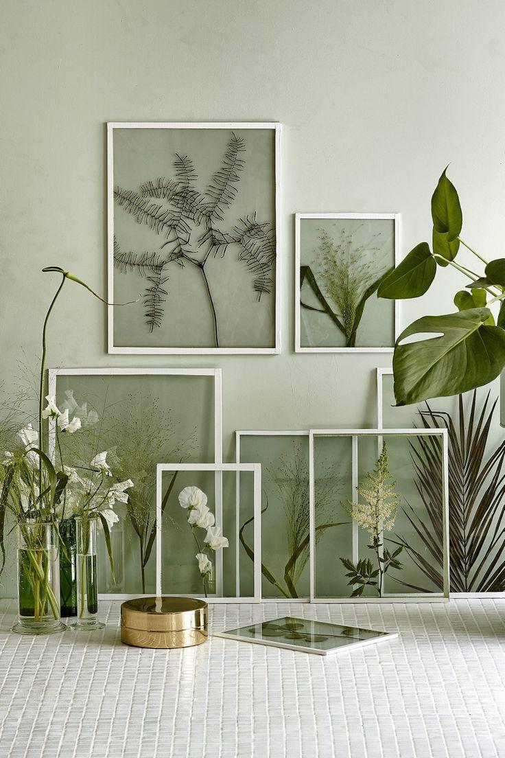Tendance plantes vertes décoration