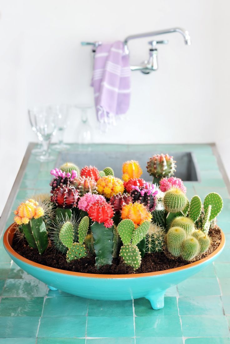 Tendance : les cactus