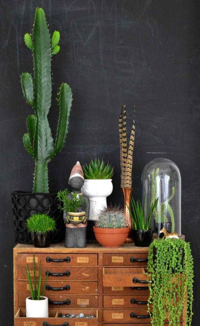 Cactus dans la déco