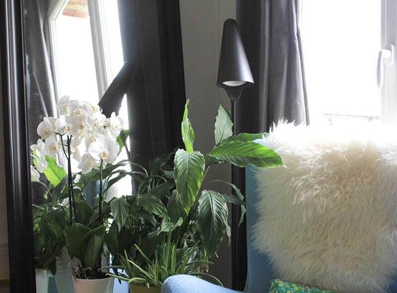 Orchidée en décoration