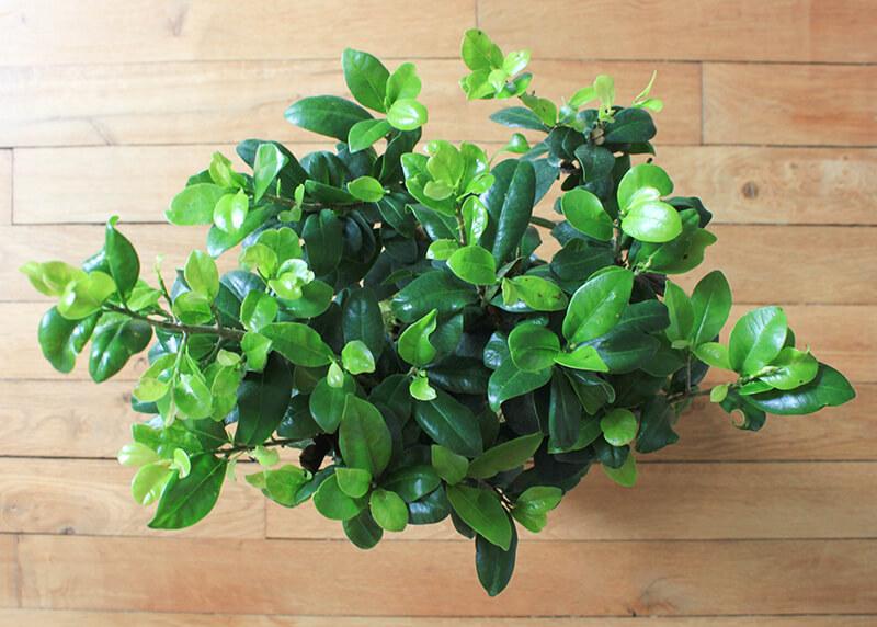 Décorer avec des plantes vertes