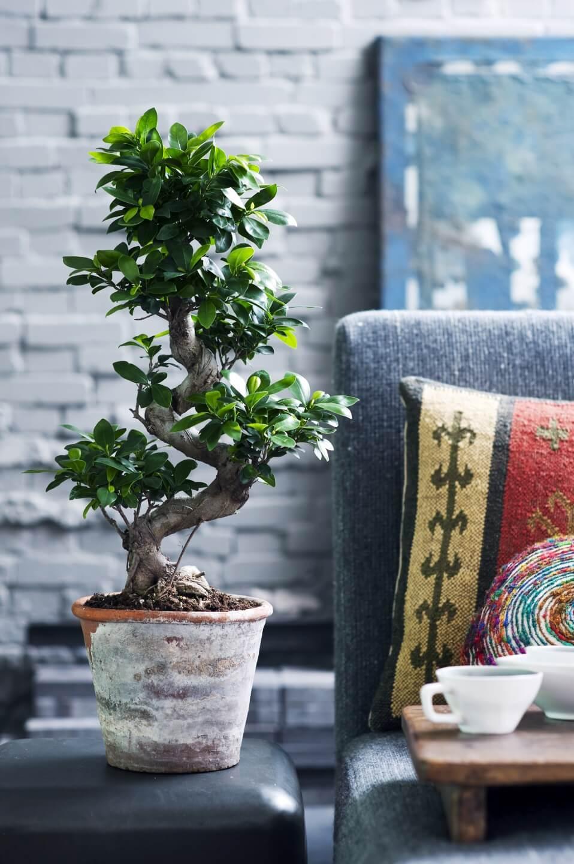 Avoir un arbre dans son salon