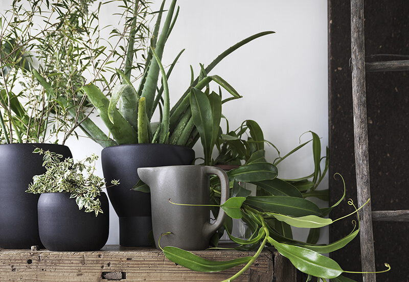 Décorer avec des plantes grasses