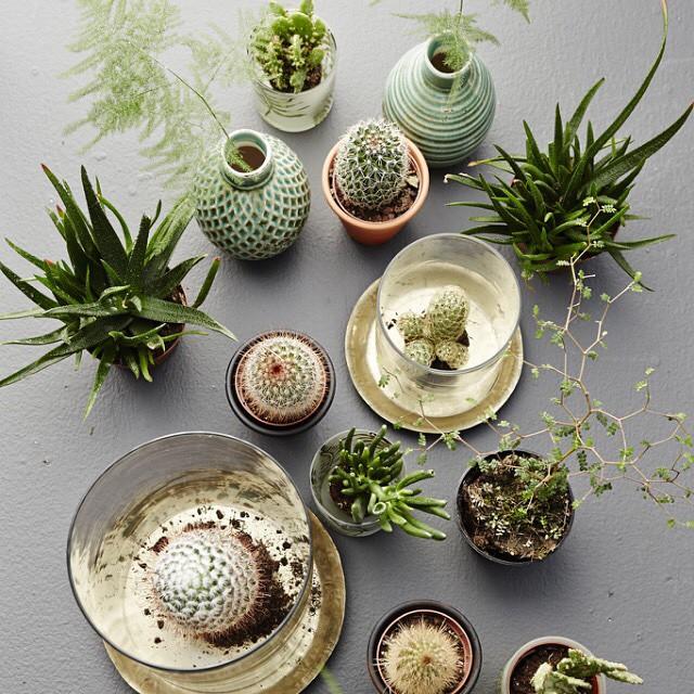 La mode des cactus dans la déco
