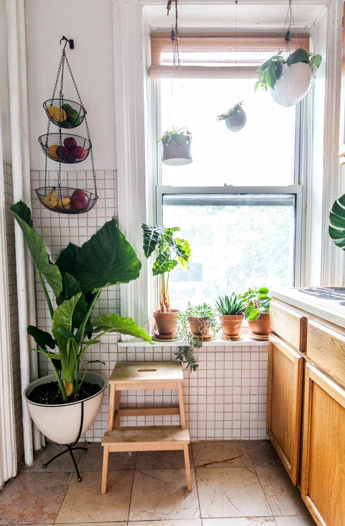 Accumuler des plantes vertes
