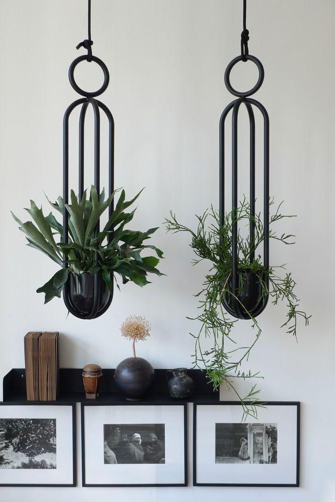 Suspension pour plante verte