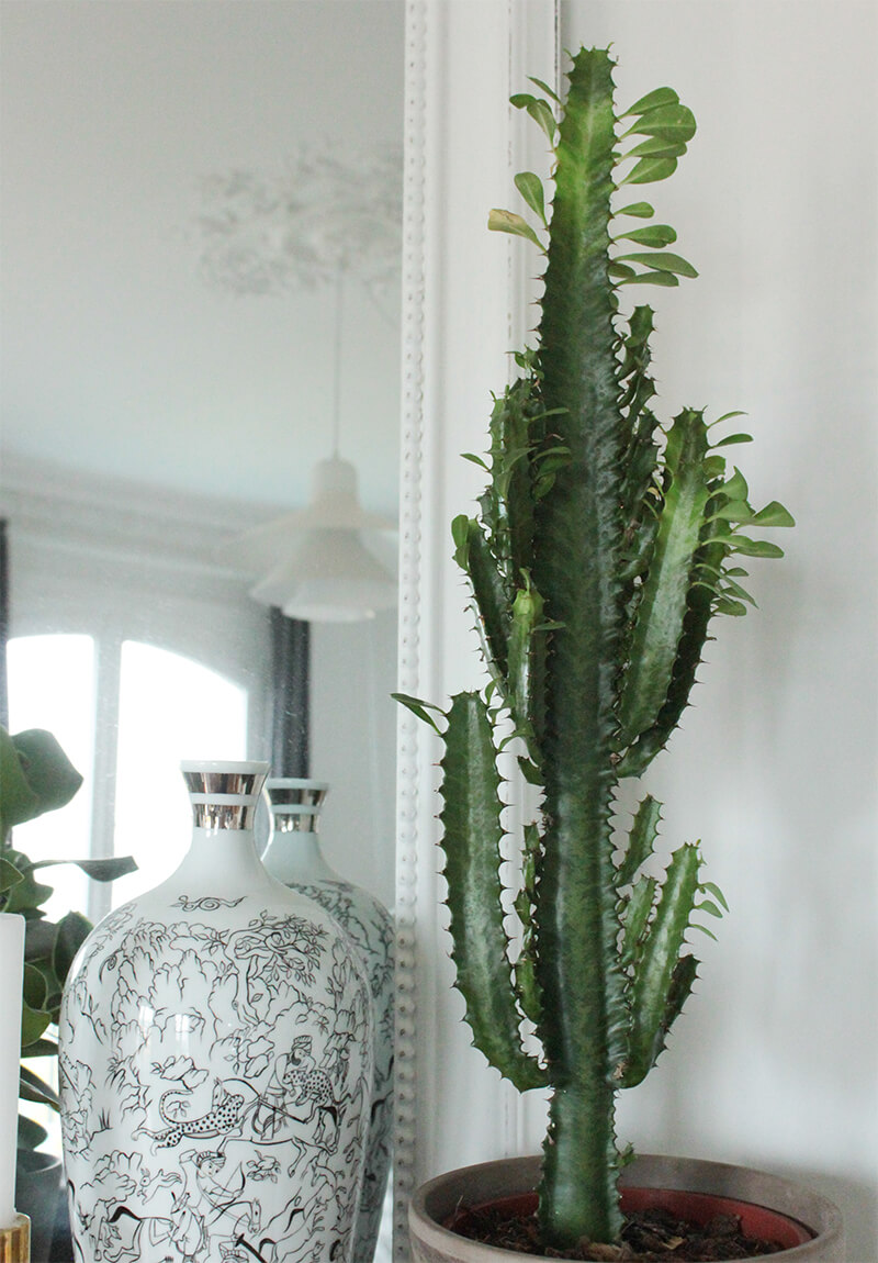 Les cactus en décoration