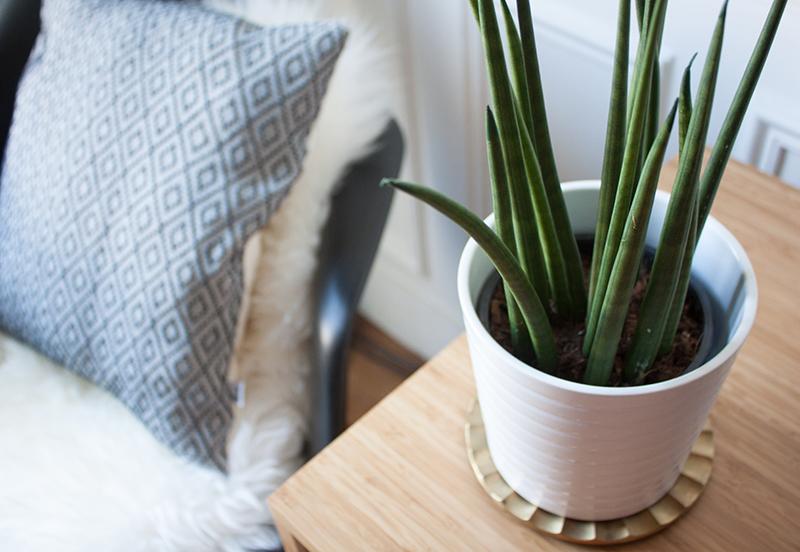 Plante verte en décoration