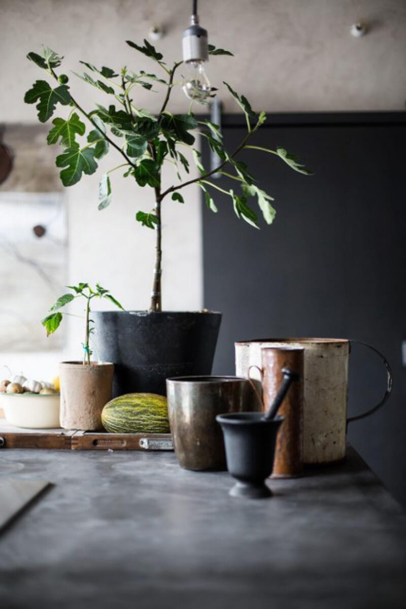 Plantes en pot en intérieur