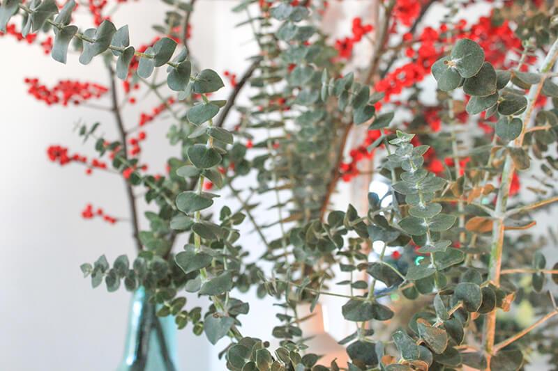 Décorer avec de l'eucalyptus