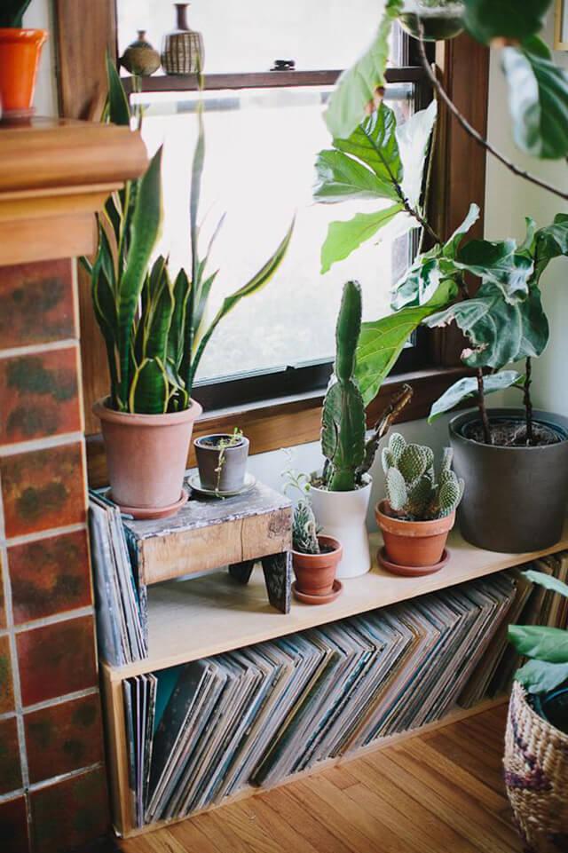 Cactus en décoration
