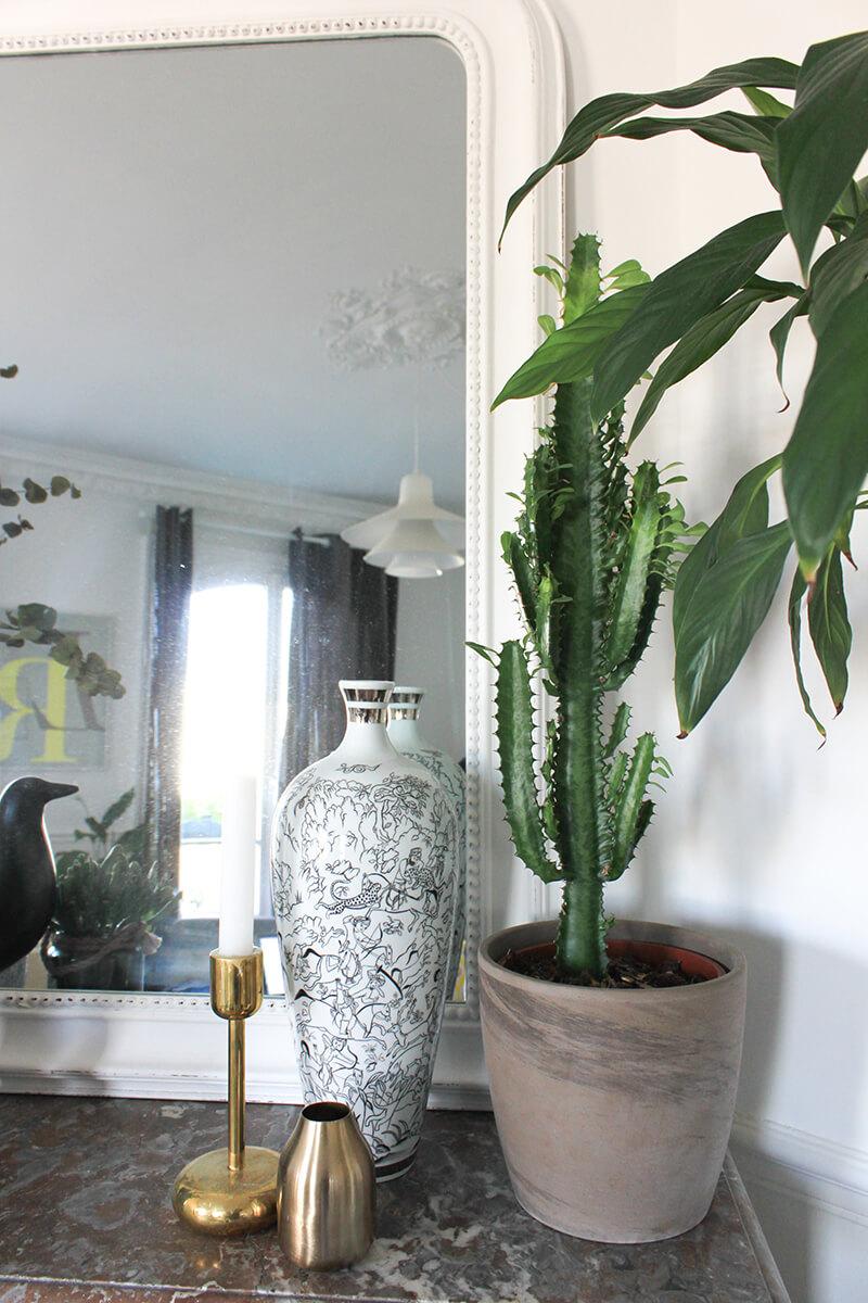 Tendance : les cactus en déco