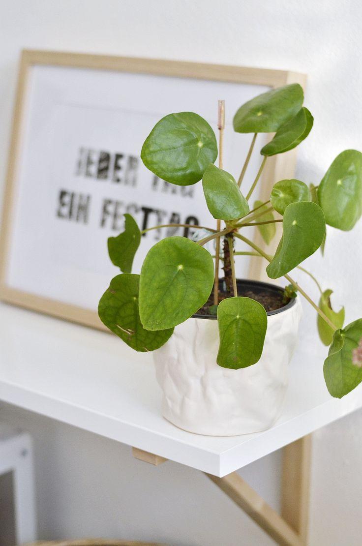 S'entourer de belles plantes : le Pilea