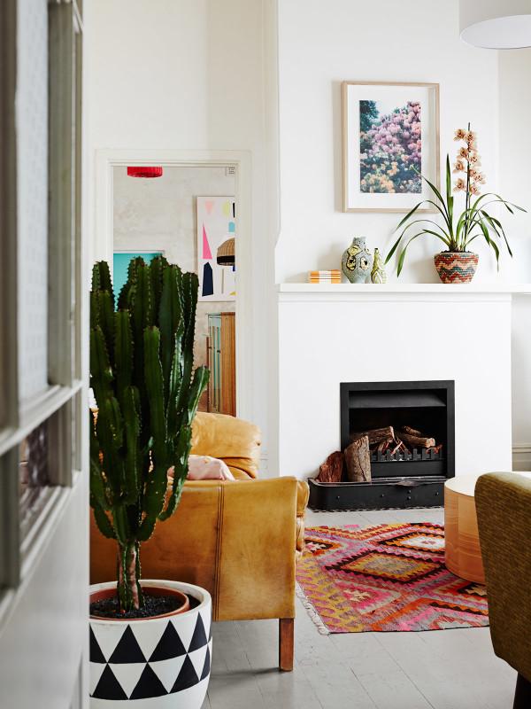 Tendance cactus intérieurs