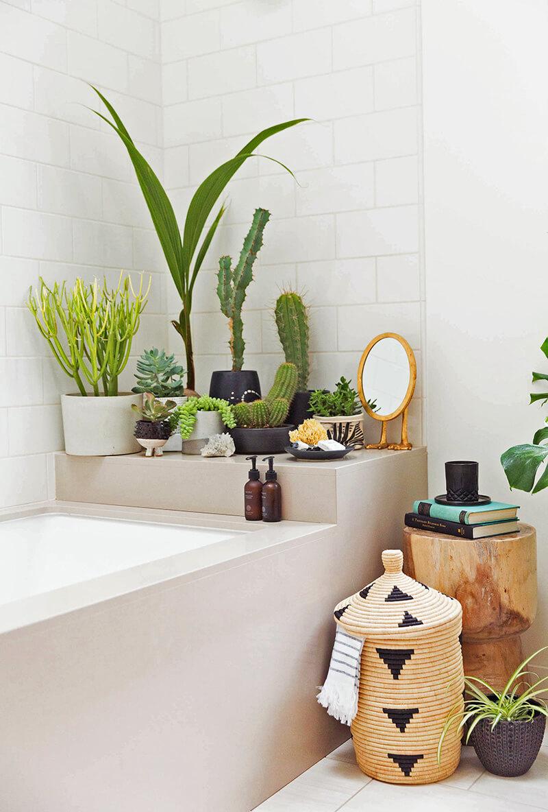 Plante verte dans la salle de bain