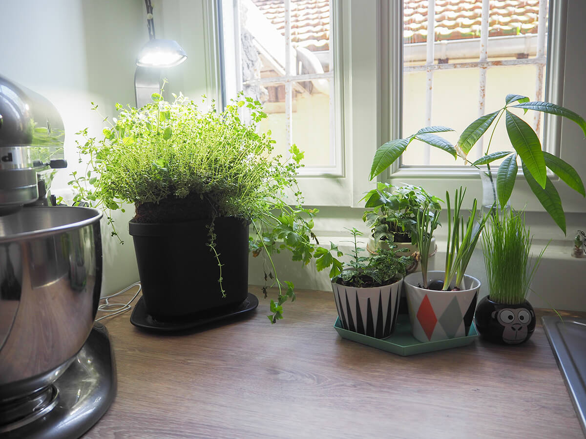 Plante suspendue ikea great suspension de plantes with for Plante murale ikea