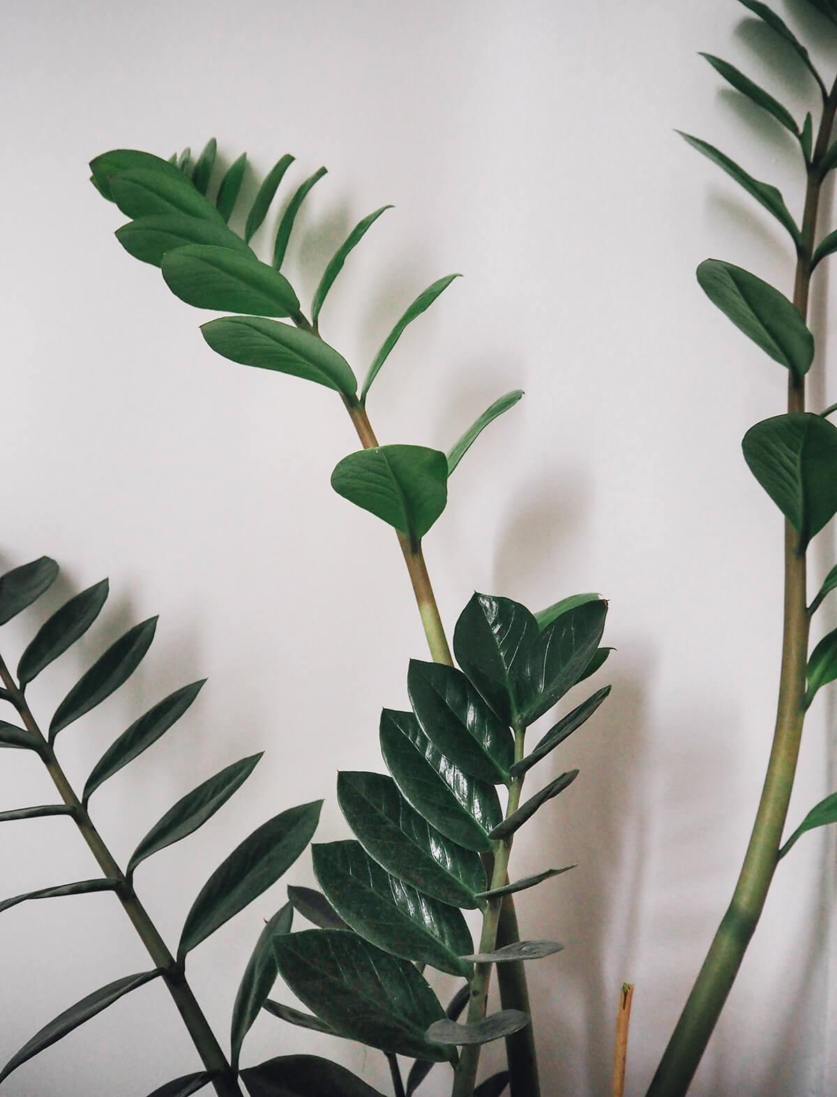 Décorer un appartement avec des plantes vertes