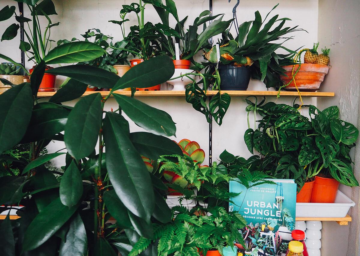 Livre Urban Jungle, décorer avec les plantes