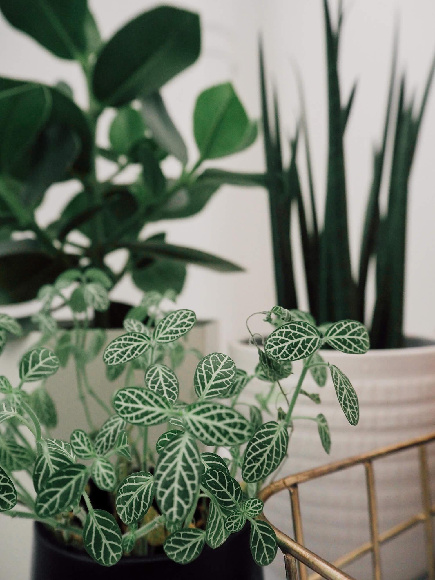 Plantes vertes dans la salle de bain