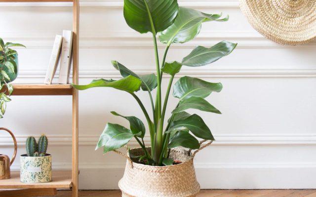 Les plus belles plantes d'intérieur